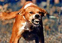 Can A Dog Get Rabies Even If Vaccinated